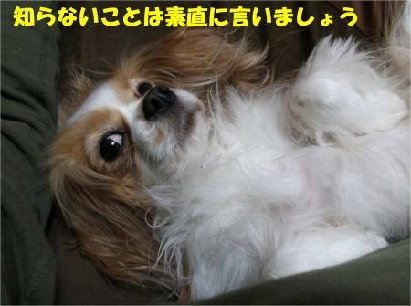 06_convert_20130228174012.jpg