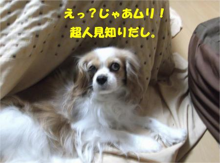 06_convert_20130326172644.jpg