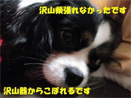 07_convert_20130205184714.jpg
