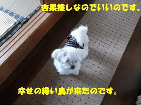 07_convert_20130301174016.jpg
