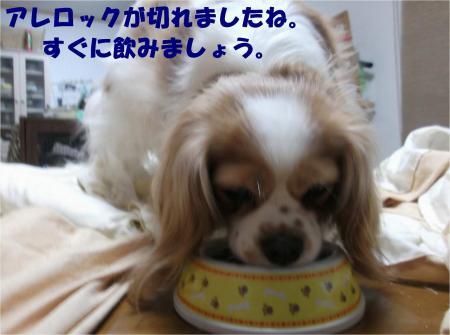 07_convert_20130325180853.jpg