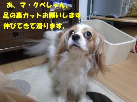 07_convert_20130326172656.jpg
