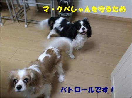 08_convert_20130206173444.jpg