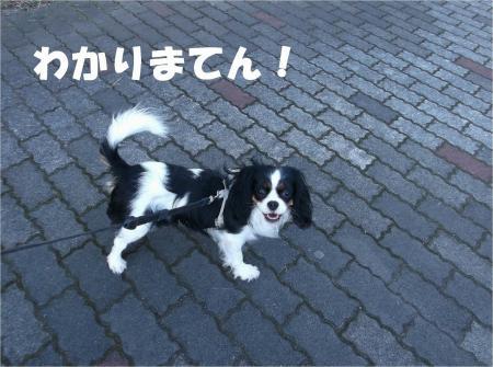 08_convert_20130212175748.jpg