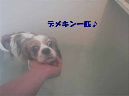 08_convert_20130218180951.jpg