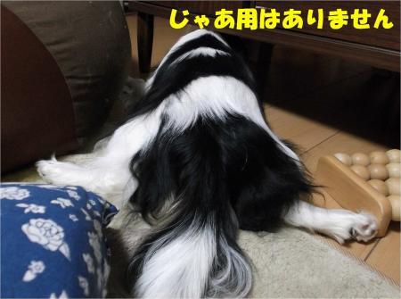 09_convert_20130206174956.jpg