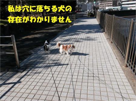 09_convert_20130212175801.jpg