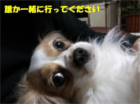 09_convert_20130214180152.jpg