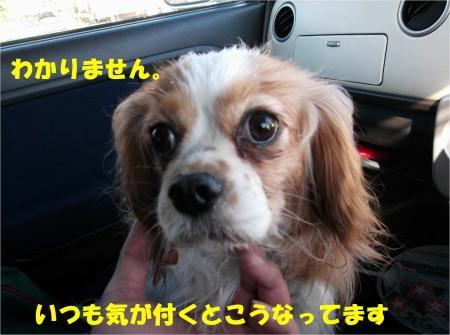 09_convert_20130225173156.jpg