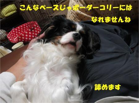 09_convert_20130322180535.jpg
