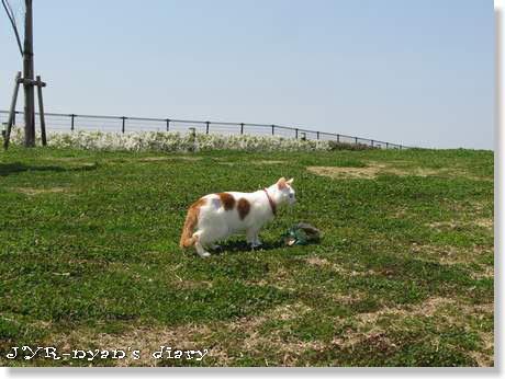 daichi120408