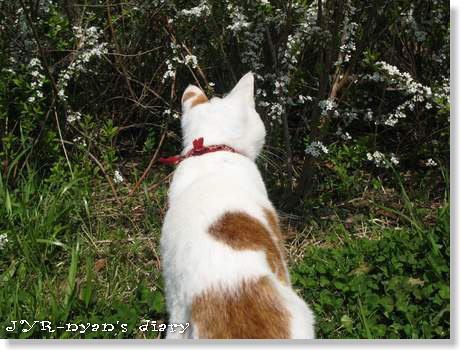 daichi120408_4