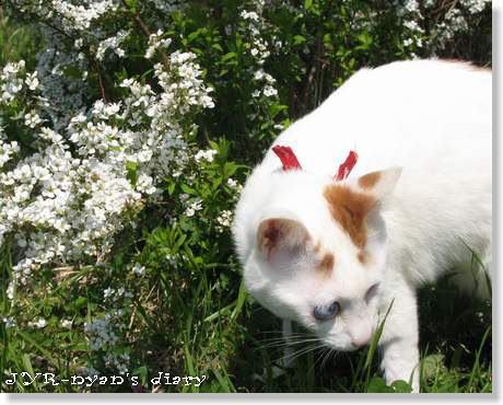 daichi120408_5