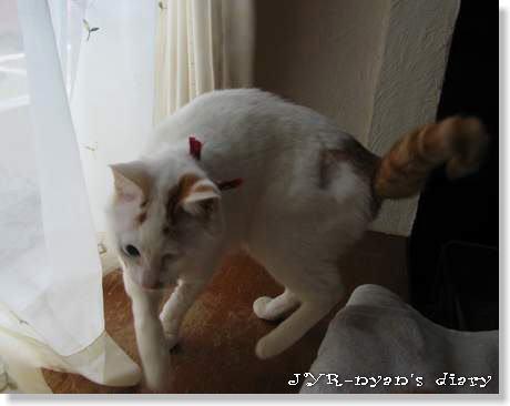daichi120412_4