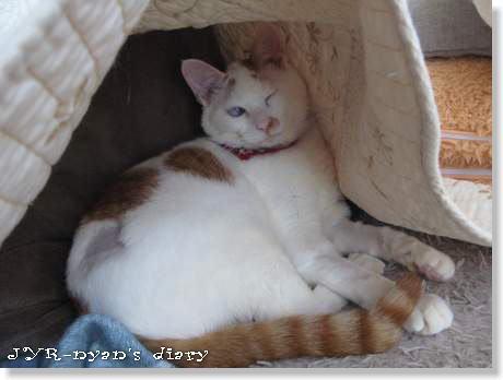 daichi120420_10