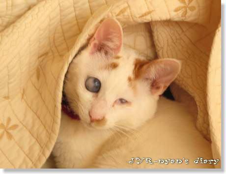 daichi120420_4