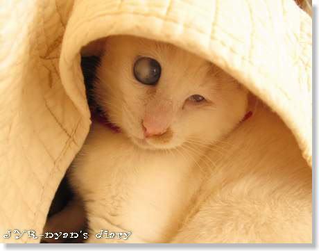 daichi120420_6