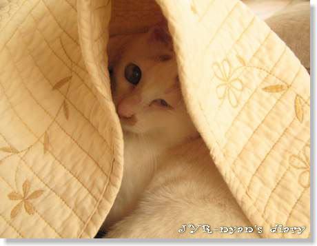 daichi120420_7