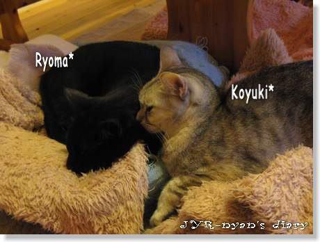 ryokoyu120413