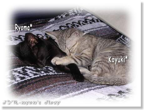 ryokoyu120413_2