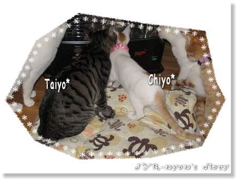 taichiyo120413