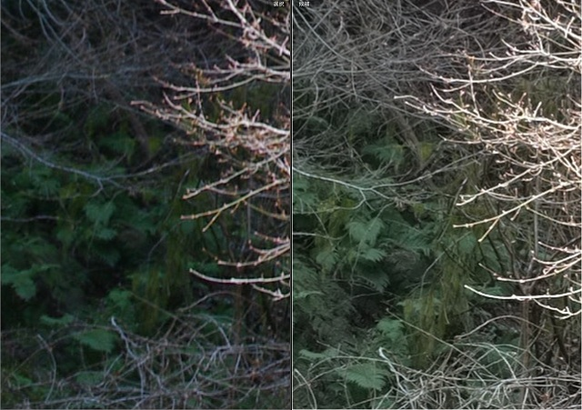 比較後ろの葉