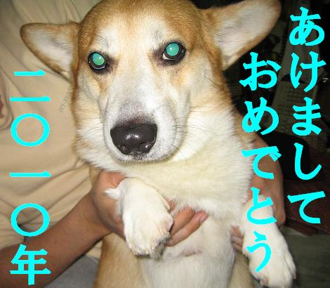 IMG_4375-2.jpg