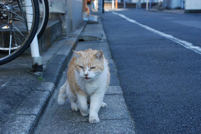 葛飾区の猫