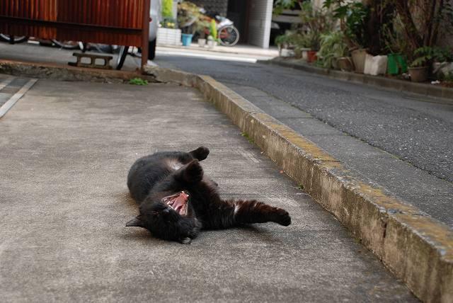 墨田区の猫