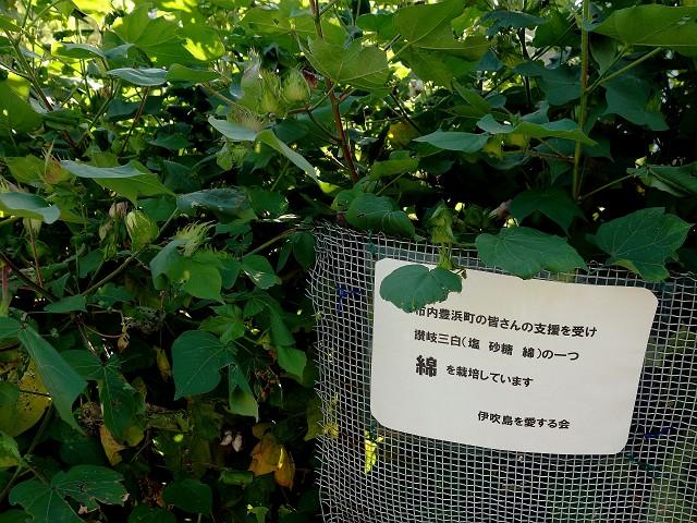 0929-ibuki-2-026-S.jpg