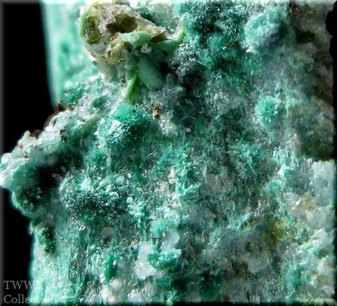 青鉛鉱仮晶孔雀石_ニューメキシコ1アップ