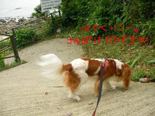 snap_tyler892_20116220110.jpg
