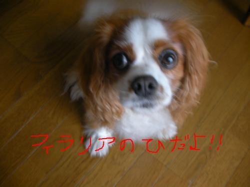 snap_tyler892_201166174819.jpg