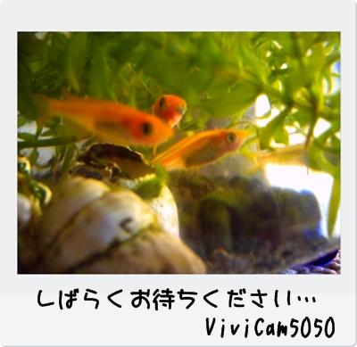 PICT0159_20091205223654.jpg
