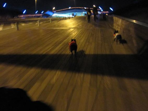 夜の大桟橋