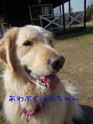4_20130304125743.jpg