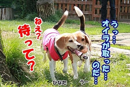 10_20110606001908.jpg
