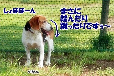10_20110606223132.jpg