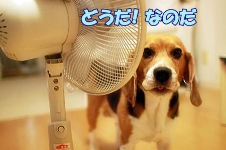 10_20110721150745.jpg