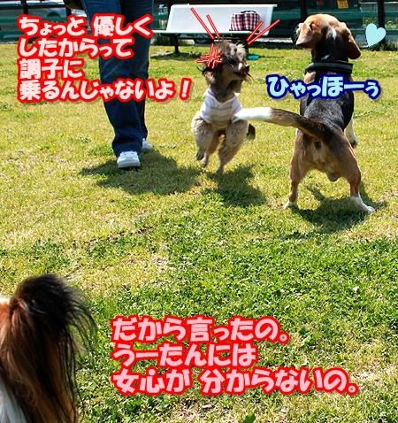 11_20110508221718.jpg