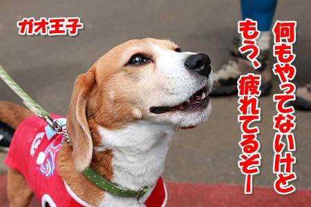 11_20110515001127.jpg