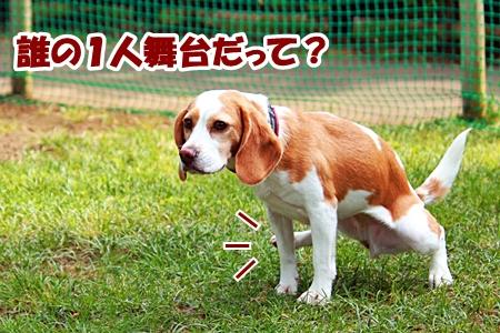 11_20110604225118.jpg