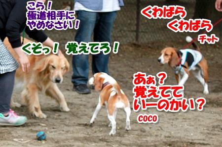 16_20110515001029.jpg