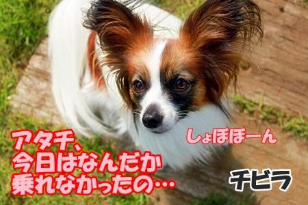 17_20110604225043.jpg