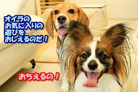 1_20110308203424.jpg