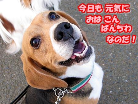 1_20110413204039.jpg