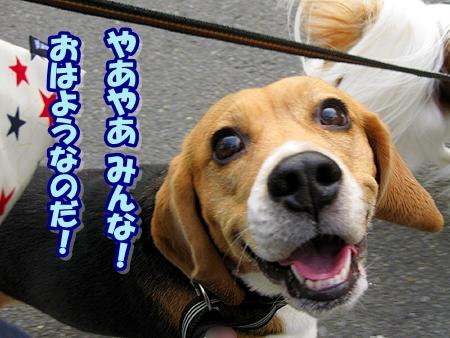 1_20110513210921.jpg