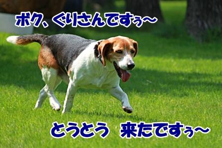 1_20110604225205.jpg