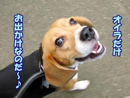 1_20110704225349.jpg