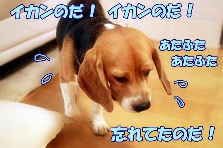 1_20110720161551.jpg